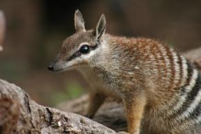 Perth Zoo presents Zoo to You – Native species breedingproject